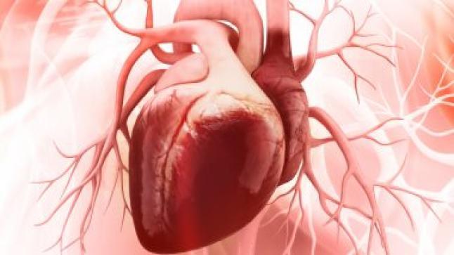 الأطعمة الغنية بالدهون ومخاطر الإصابة بأمراض القلب
