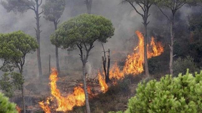 """إخماد """"حريق شفشاون"""" .. والخسائر تتجاوز 1100 هكتار…."""