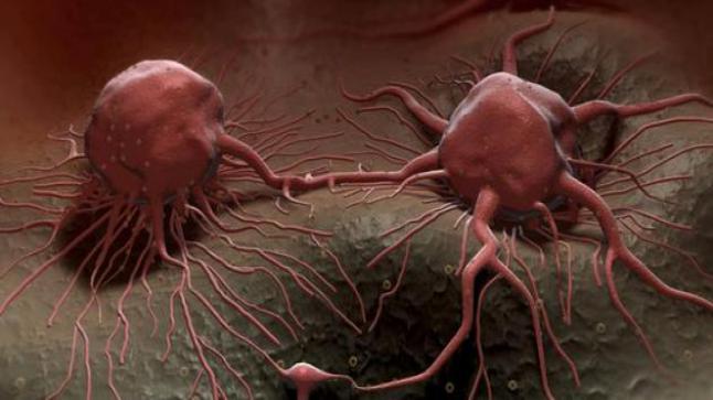 العلماء يحلون لغز ظهور الأورام السرطانية ..بعد بحثا طويلا